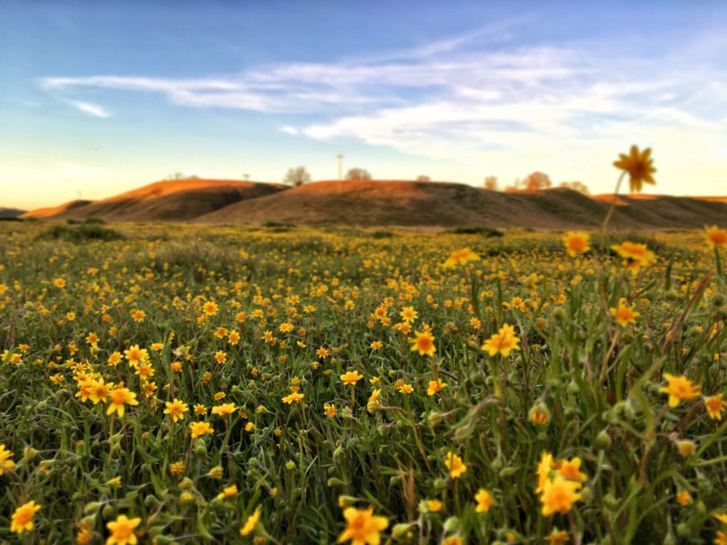 Photo: field of flowers