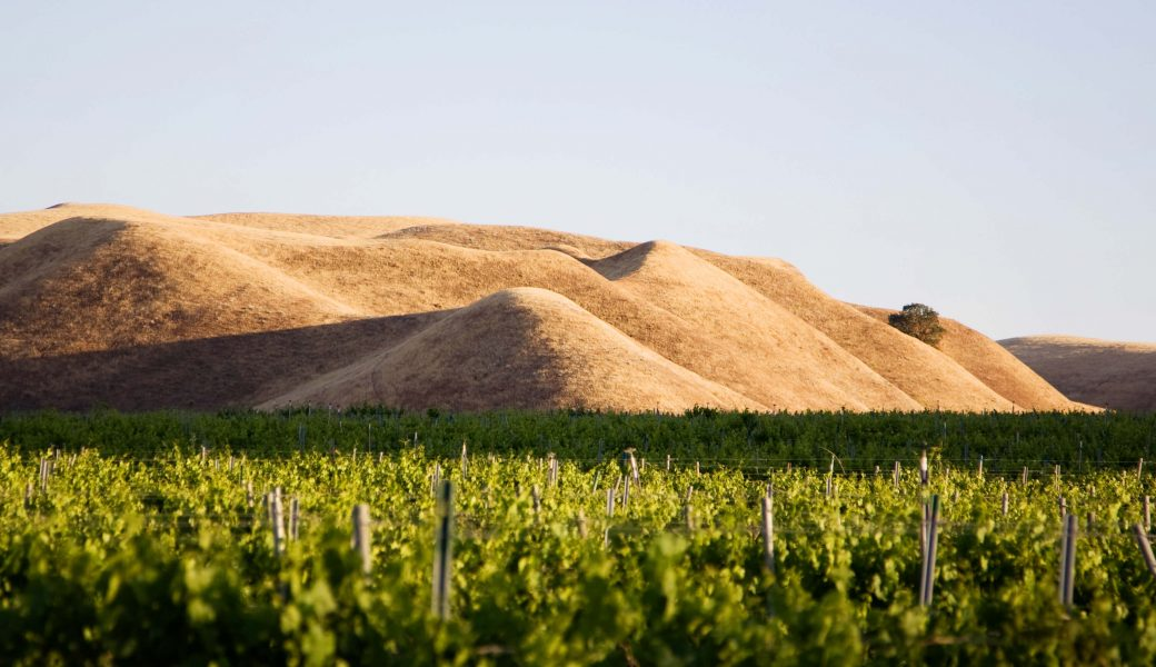 Photo: Vineyard with hills in background